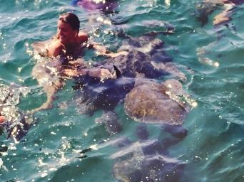 Turtle mancora
