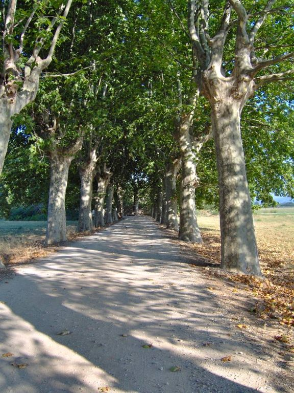 Chemin du Mas